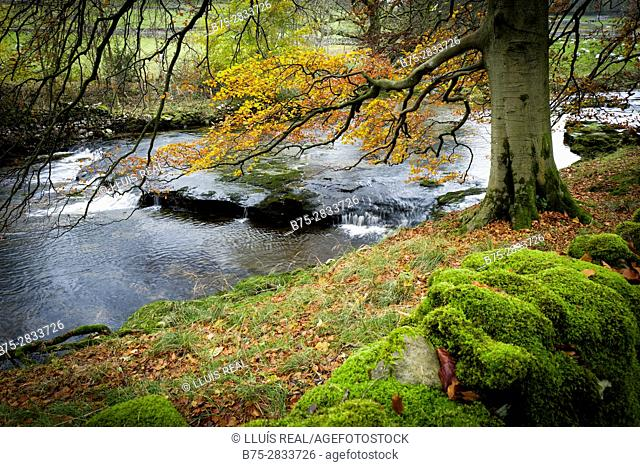 Partial view of a river and forest in autumn. Litton, Yorkshire Dales, North Yorkshire, Skipton, UK