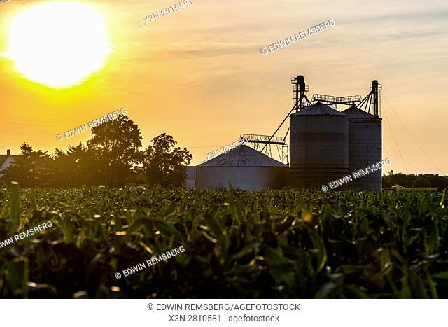 Sun setting over a field of corn on a local Maryland farm