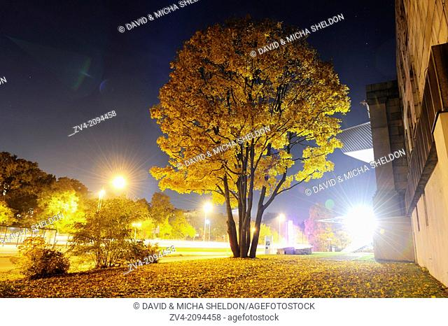 Landscape of a Field maple (acer campestre) in a town by night