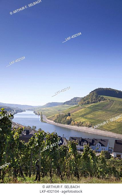 Vineyards near Nittel with view of the moselle river and Luxembourg, Nittel, Rheinland-Pfalz, Germany