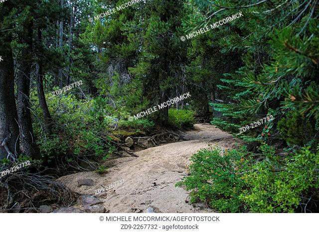 A dry streambed in sharp contrast to surrounding greenery in California's high Sierra