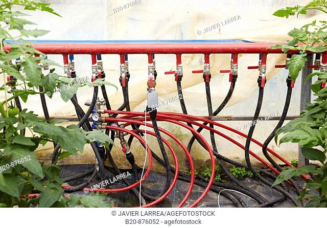 Watering systems, tomato plants in greenhouse, Nuarbe, Azpeitia, Gipuzkoa, Basque Country, Spain