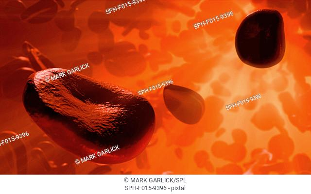 Illustration of red blood cells flowing inside an artery or vein. Red blood cells are biconcave, disc-shaped cells that transport oxygen from the lungs to body...