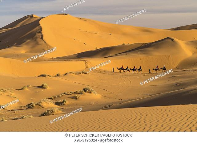 Camel caravan in the Sahara desert near Merzouga, Kingdom of Morocco, Africa