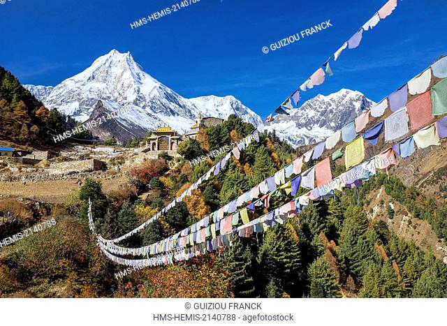 Nepal, Gandaki zone, Manaslu Circuit, between Prok and Lho, the Mount Manaslu (alt.8156m) from the village of Lho (alt.3180m) and Ribung Gompa monastery
