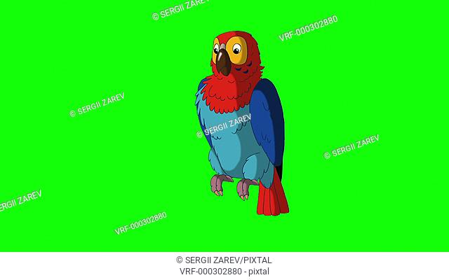 colorful parrot talks green