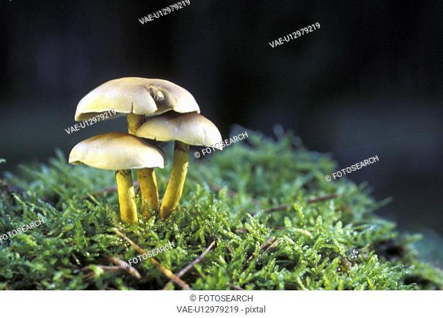 beige, CLOSE, bryophyta, brown, aichner