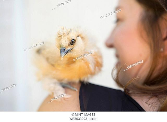 A woman with a small fluffy chick bird perched on her shoulder