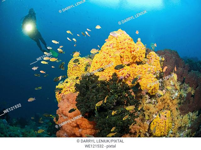 Woman diving on coral reef, Raja Ampat, Indonesia