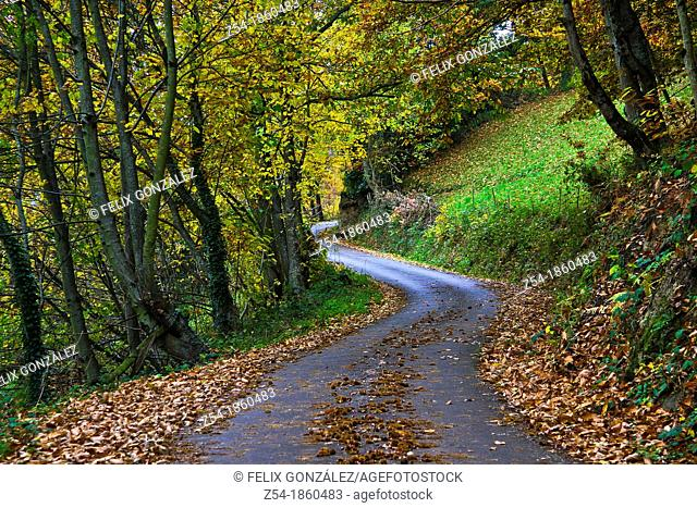 Country road trough an autumnal forest, Asturias, Spain