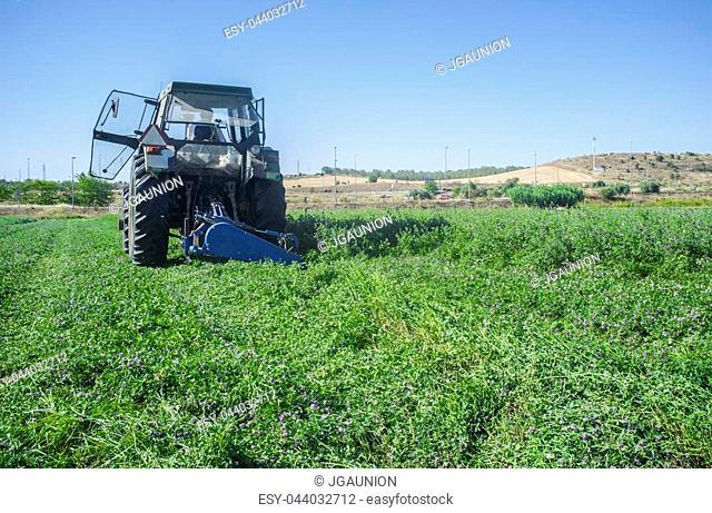 Tractor cutting and swathing alfalfa. Badajoz, Spain