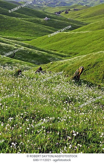 The foothills of Northern California bloom in th spring