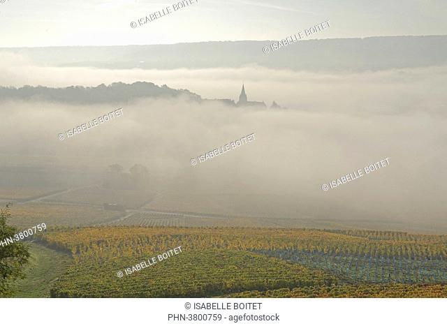 France, Champagne-Ardenne, the Marne, epernay, the vineyards of champagne