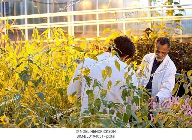 Scientists working in greenhouse
