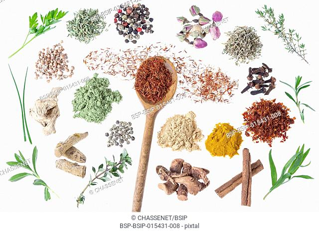 Presentation of different spices and culinary herbs on white