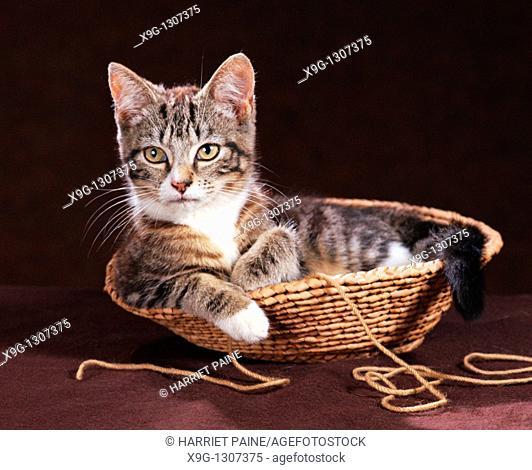 Cat in wicker basket