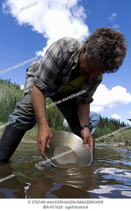 Man, gold panning on Gold Bottom Creek, Klondike gold rush, Dawson City, Yukon Territory, Canada, North America