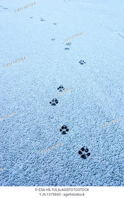 dogs paw prints on ground