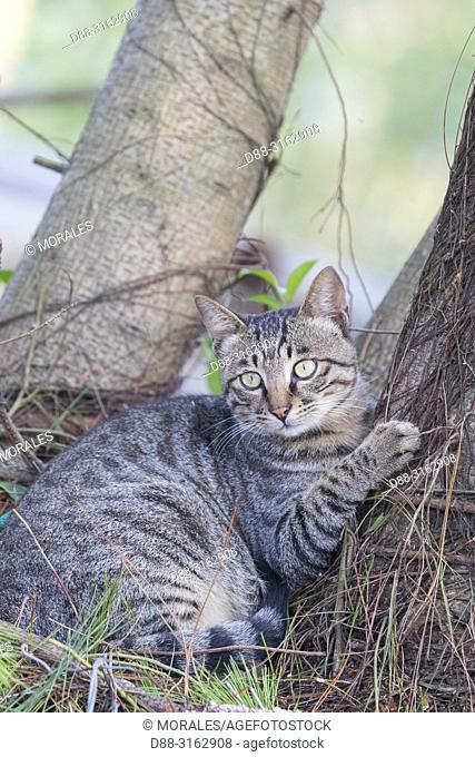 China, Fujiang Province, Xiapu County, Domestic cat