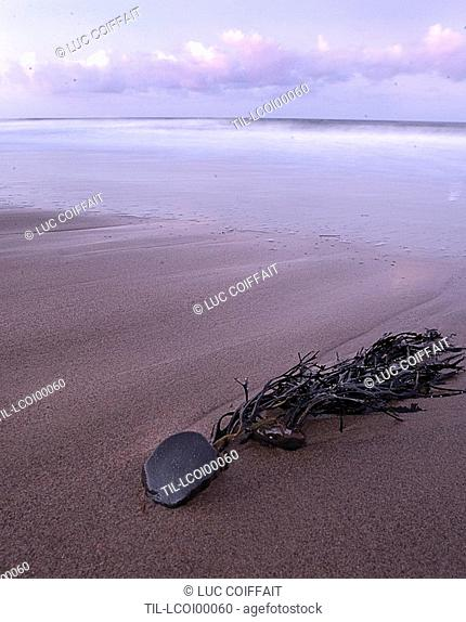Seaweed lying on a deserted beach