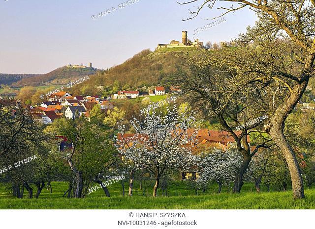 Cherry Blossom at Mühlberg with Gleichen Castle and Mühlburg, Drei Gleichen, Thuringia Germany