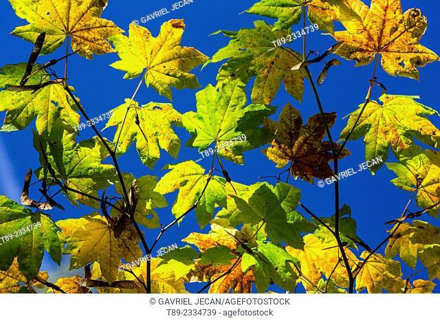 Autumn season in Mt Rainier National Park, Mt. Rainier, Washington, USA
