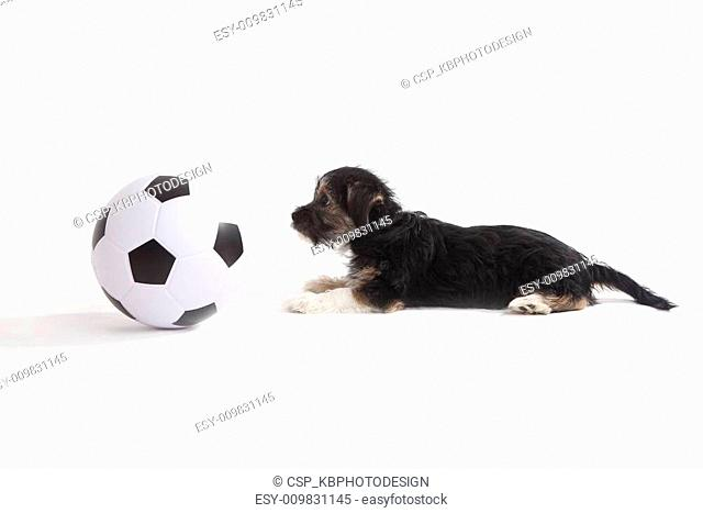 Puppy with football