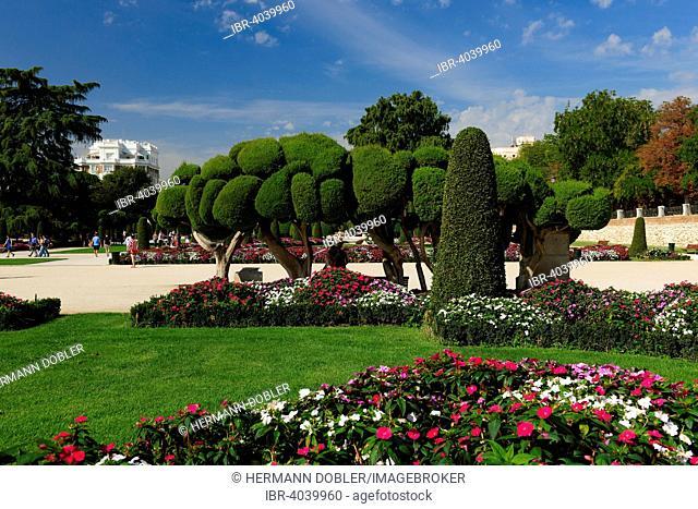 Parque del Retiro with Mediterranean Cypress (Cupressum sempervirens), Madrid, Spain