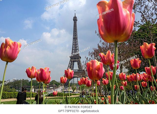 TULIPS IN THE TROCADERO GARDEN AND THE EIFFEL TOWER, PARIS, 16TH ARRONDISSEMENT, FRANCE