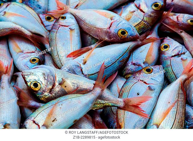 Small fish for sale at the Marseille fish market in the Vieux Port