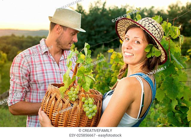 Couple in grape picking at the vineyard with a wicker basket