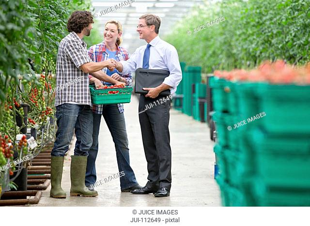Businessman and growers with crate of tomatoes handshaking in greenhouse