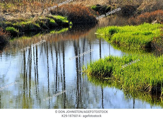 Fairbank Creek with tree reflections, Greater Sudbury Whitefish, Ontario, Canada