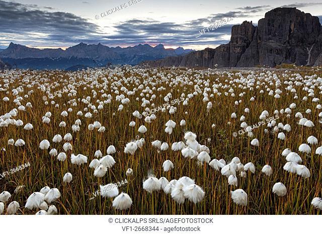 Masores de Pissadu, Sella group, Dolomites, South Tyrol, Bolzano, Italy