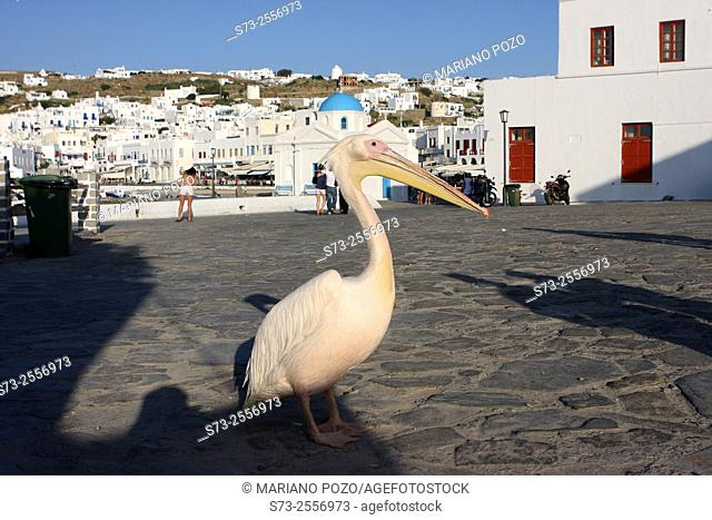 Pelican Petros, the town mascot in front of the blue domed church and the port, Mykonos, Greece