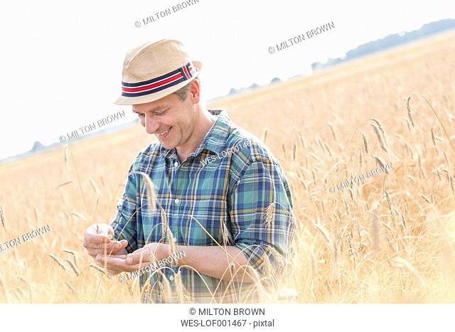 Farmer examining grain in field