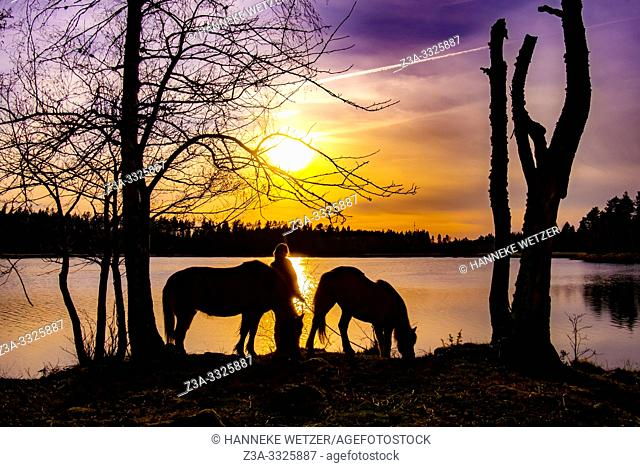 Girl with a horse at a lake in Sweden during sunset