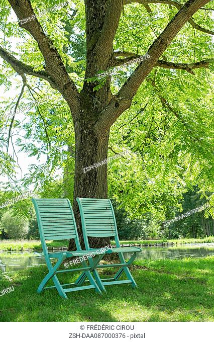 Chairs arranged beneath a tree at water's edge