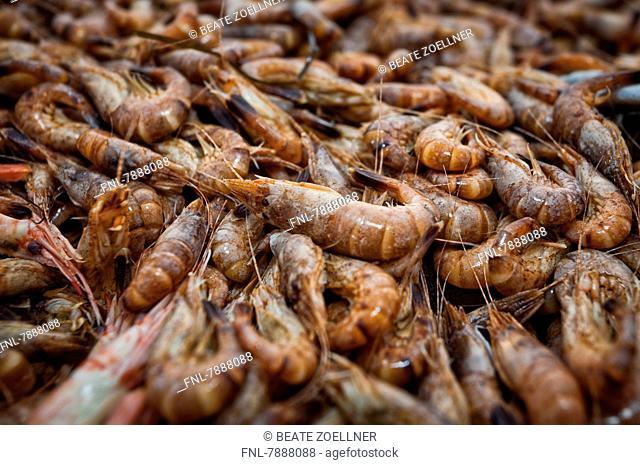 Headline: Freshly caught cooked North Sea shrimps