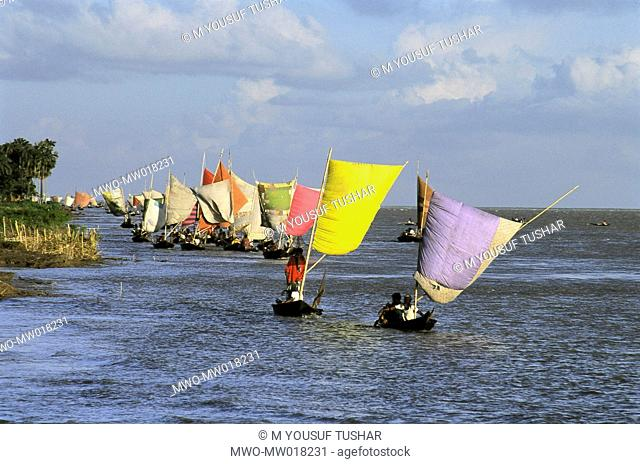 Hilsha fishing from sailing boats, in the Padma river, during monsoon, a season when the river thrives with Hilsha fish Faridpur, Bangladesh 2006
