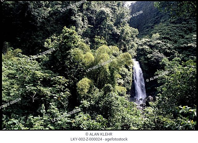 Waterfall nestled in dense foliage