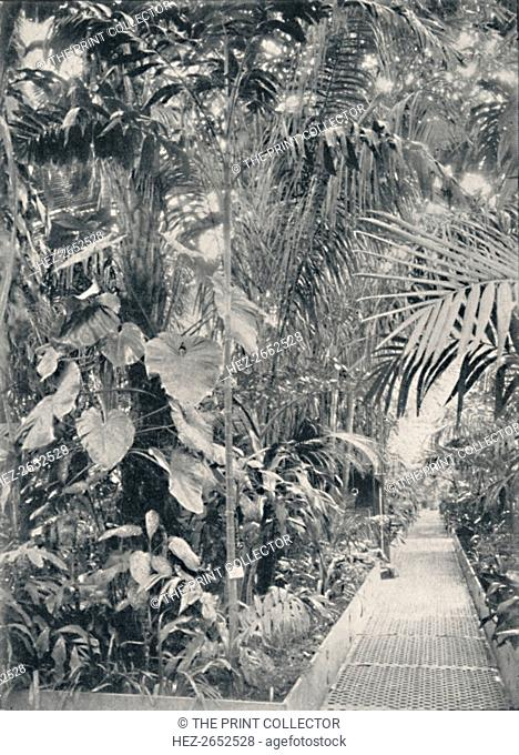 'Interior of the Great Palm House, Kew Gardens', 1904. The Palm House was built by architect Decimus Burton and iron-maker Richard Turner between 1844 and 1848