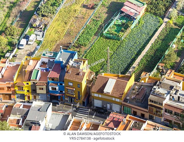 Vegetable crops in fields behind houses in La Angostura village near Santa Brigida on Gran Canaria, Canary Islands, Spain. Europe