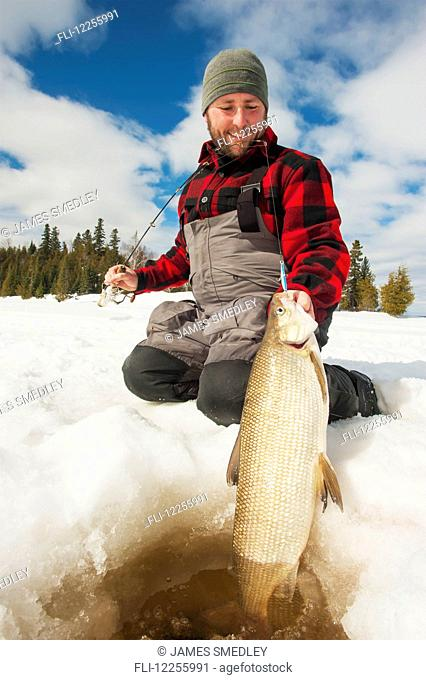 Ice fisherman holding a large whitefish ready to release back into the hole; Ontario, Canada