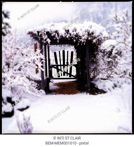 Snow-covered trees and gate