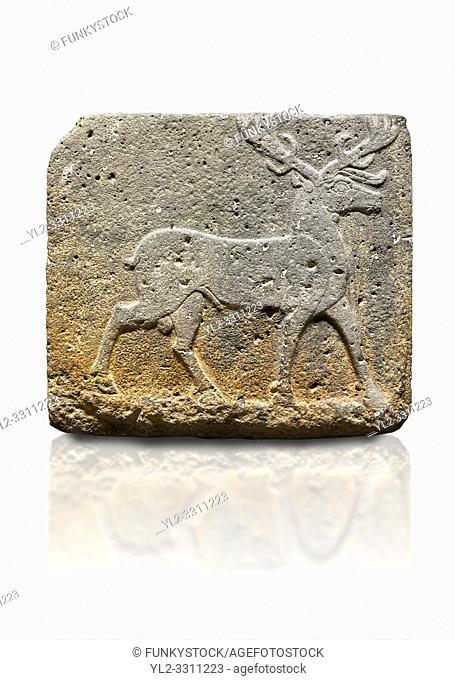Hittite monumental relief sculpted orthostat stone panel from Water Gate Basalt, Karkamıs, (Kargamıs), Carchemish (Karkemish). 900-700 BC . Stag