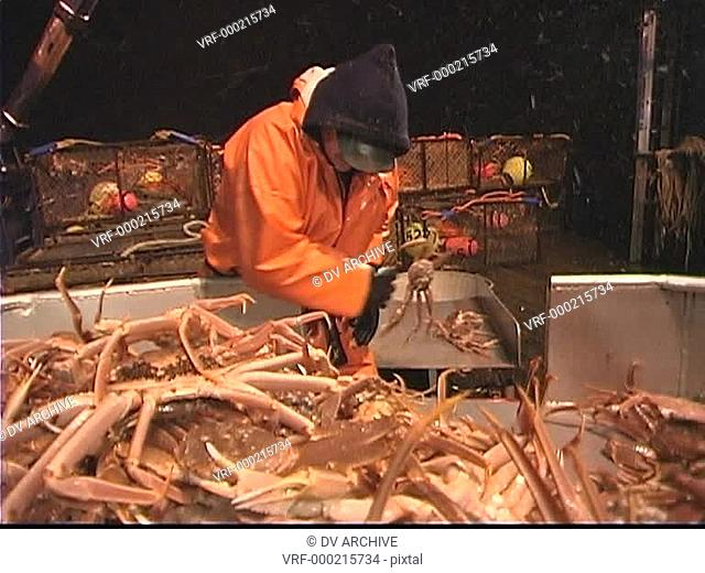 Three men work together to sort crabs into different bins