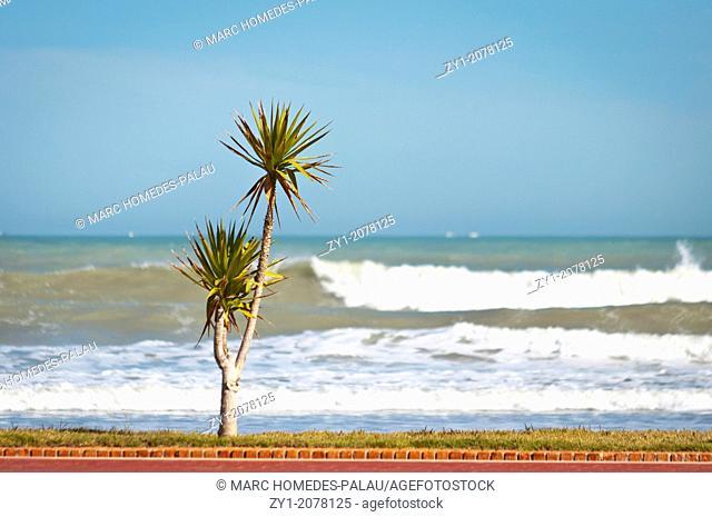 Summer scene. Palms on the beach of Peniscola Spain