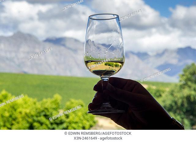SOUTH AFRICA- Wine tasting with vineyard in background