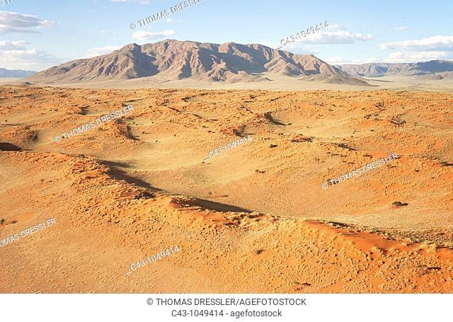 Namib - Aerial view of grass-grown sand dunes and Camelthorn Trees Acacia erioloba against the background of the Losberg at the edge of the Namib Desert  The...